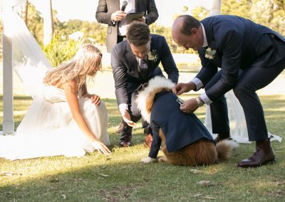 cute-dog-ring-bearer